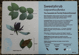 A 2014 project of the Friends of the Louisiana State Arboretum created durable interpretive signage found throughout the trail system.