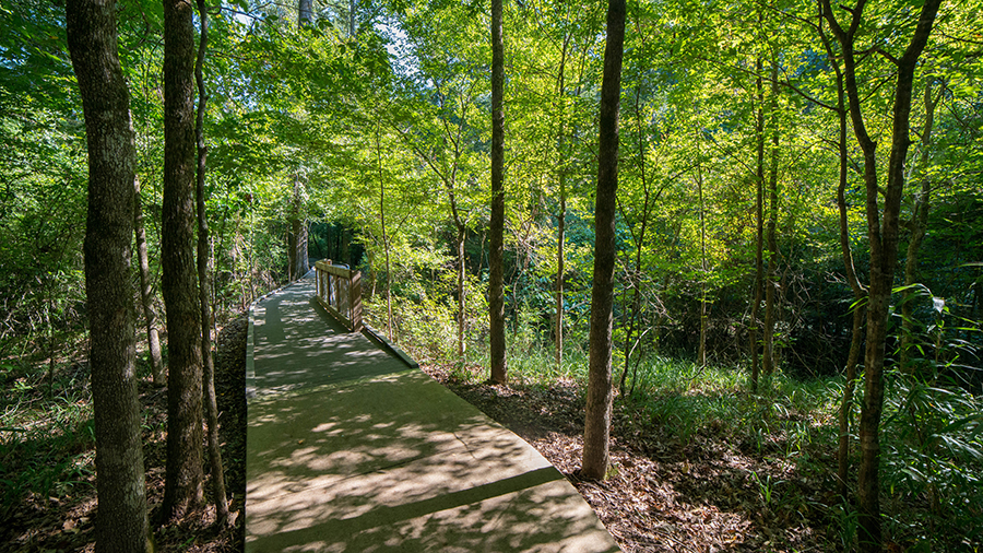 Take a summer stroll along the Bald Cypress Trail and enjoy the shade of the many species of deciduous trees along the path.
