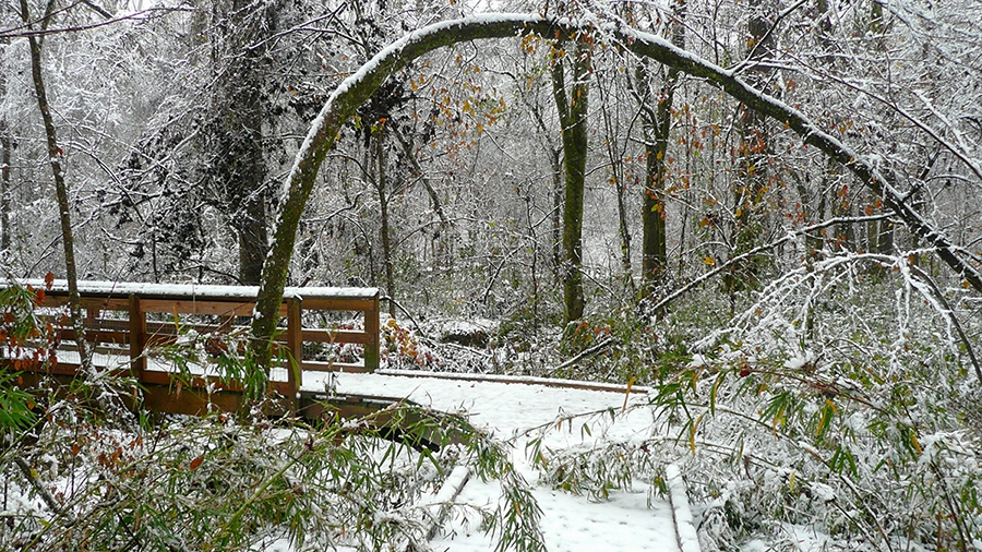 Snow comes on occasion to the Arboretum.